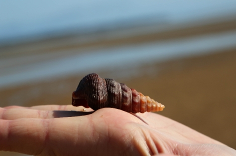 shell-wide