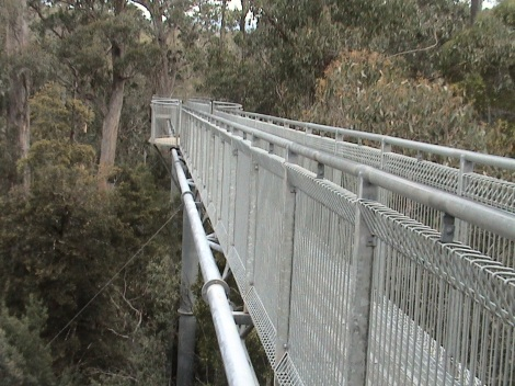 Elevated walkway forms part of the Tahune Airwalk experience