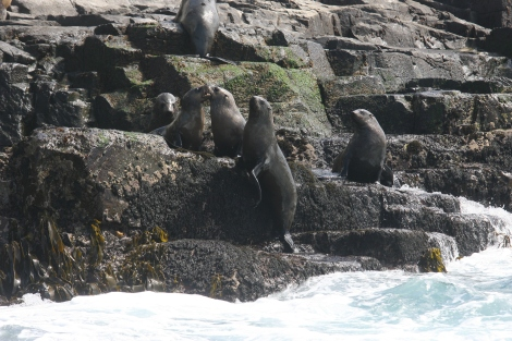 Seals sunning themselves at The Friars
