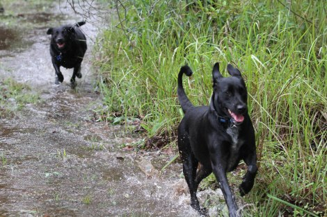 Jasmine and Layla race through shallow stream