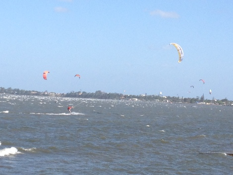 Kites skimming the Bramble Bay foreshore between Brighton and Sandgate